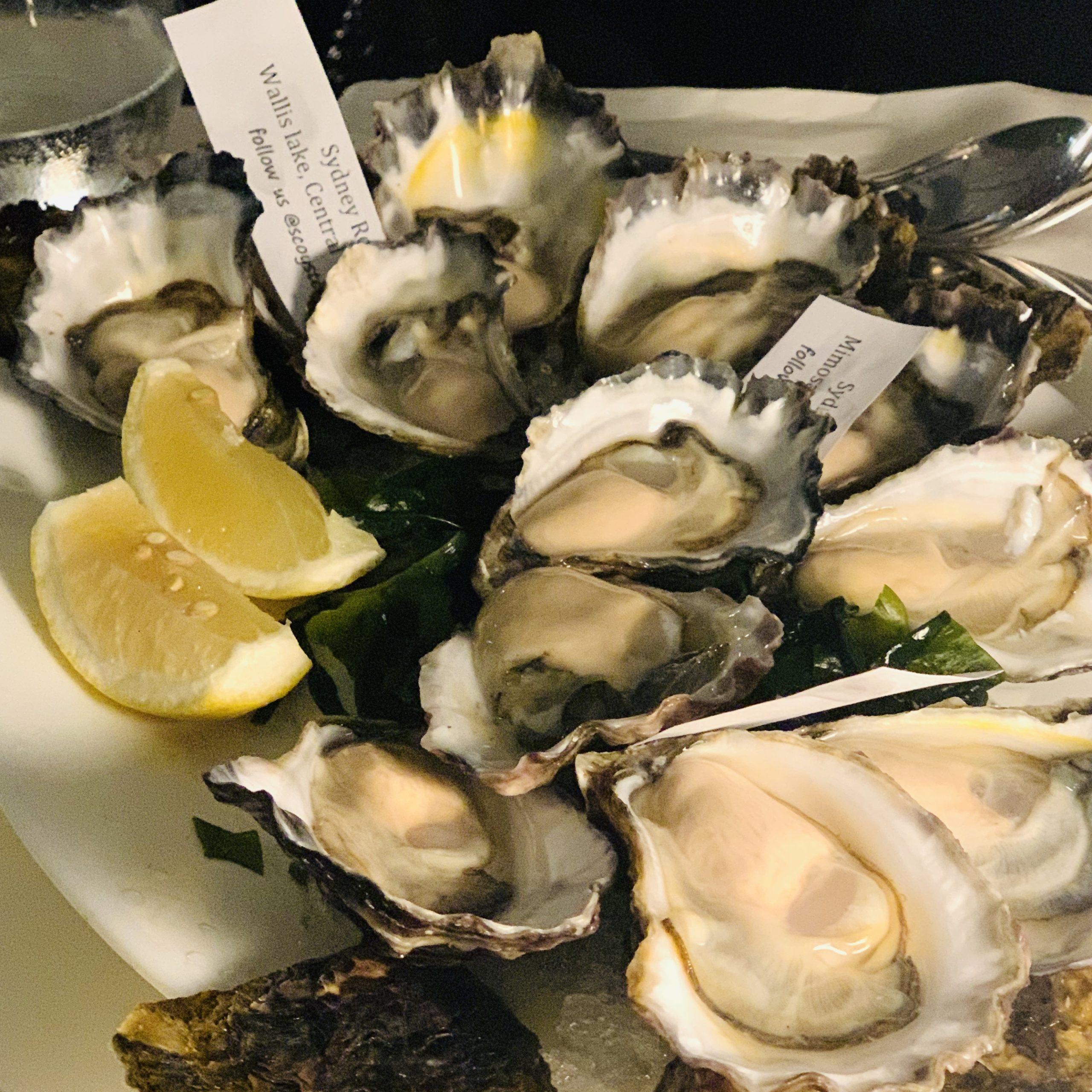 the sydney cove oyster bar Sydney シドニー サーキュラーキー 世界遺産 オペラハウス operahouse